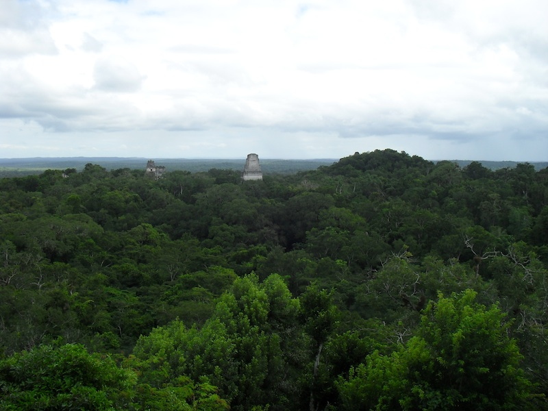 view from the tower at Tikal with view of forest canopy